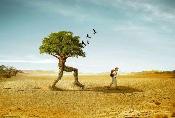 дерево и человек